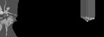 BioBlogerinas.sk